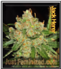 Jack Herer Just Feminized Mix & Match Seeds
